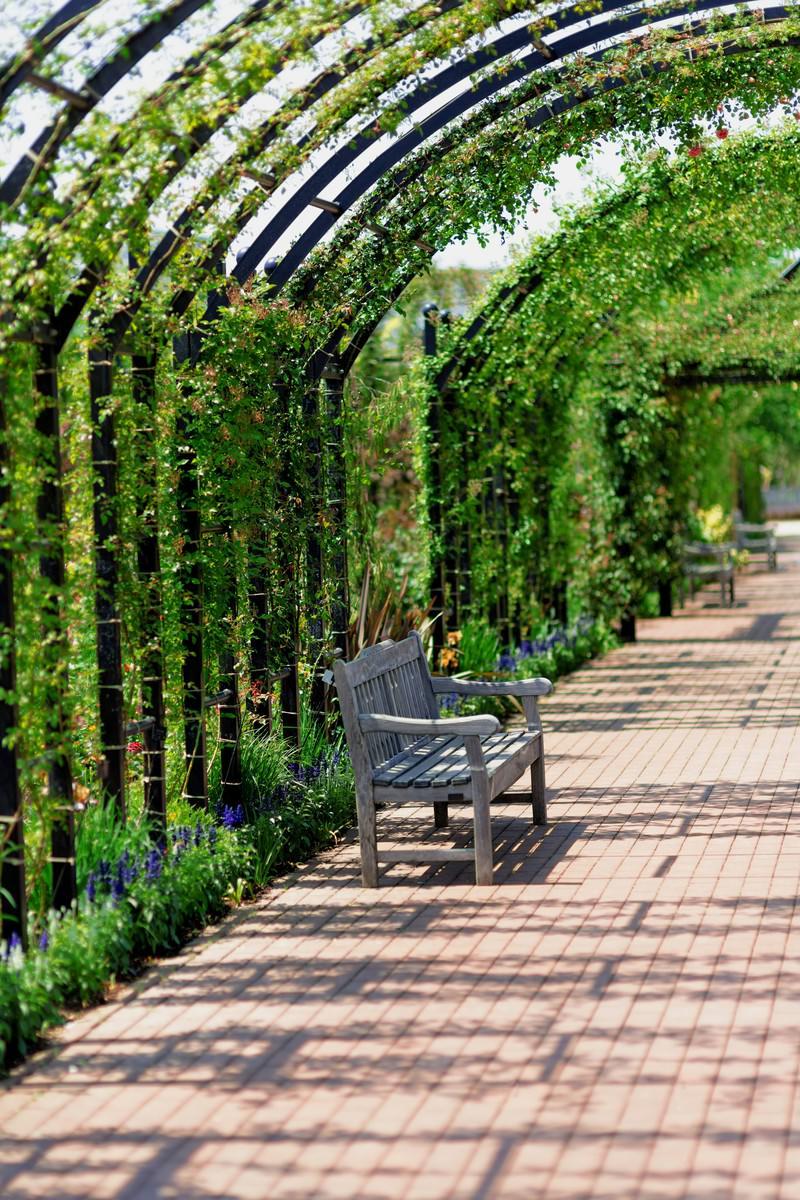 「植物園のアーチとベンチ」の写真