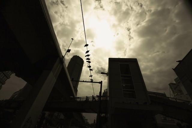 電線の上の鳩達の写真