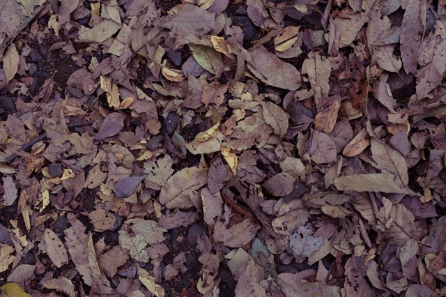 落ち葉のテクスチャーの写真
