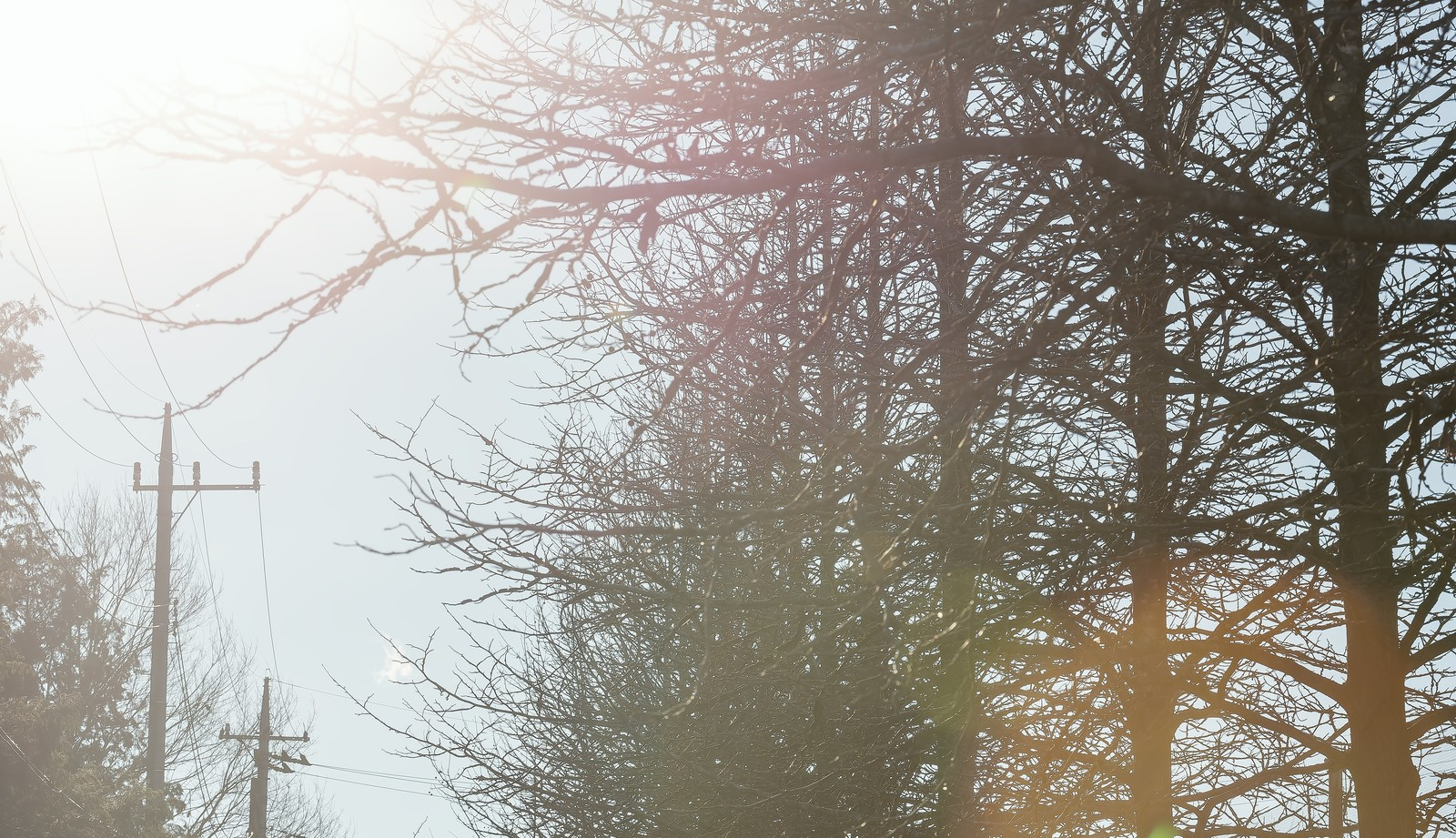「枯れた並木枯れた並木」のフリー写真素材を拡大