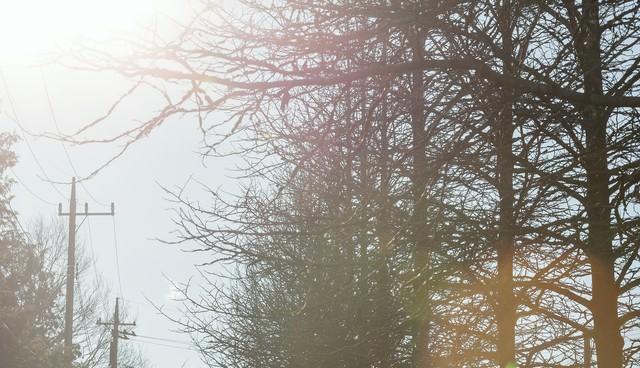 枯れた並木の写真