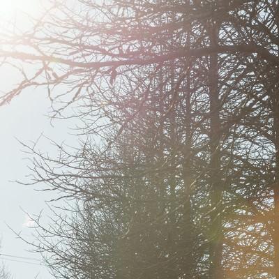 「枯れた並木」の写真素材