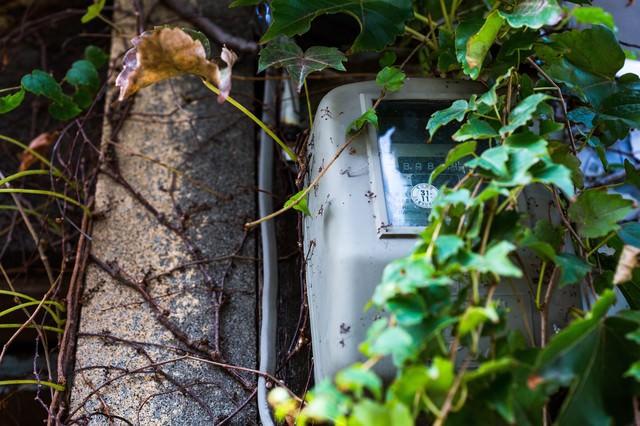 蔦で覆われたアパートの電気メーターの写真