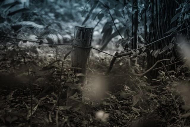 「不気味な山道」のフリー写真素材