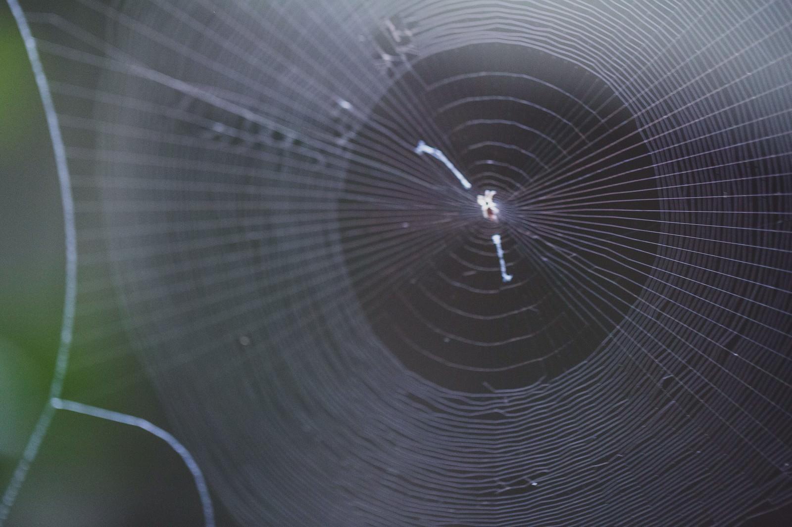 「蜘蛛の巣」の写真