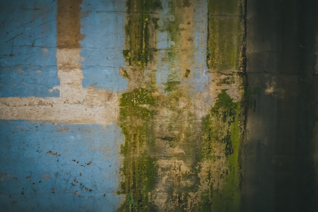 塗装が剥がれ落ちた壁の写真