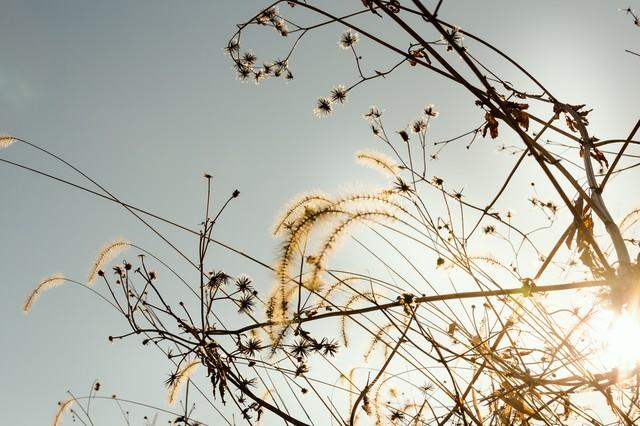 枯草と冬の陽気の写真