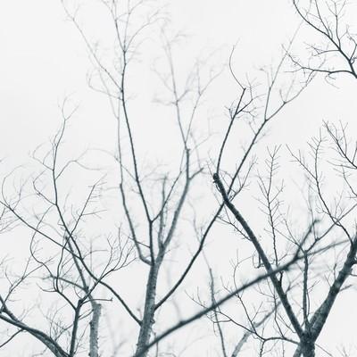 葉が落ちた街路樹の写真