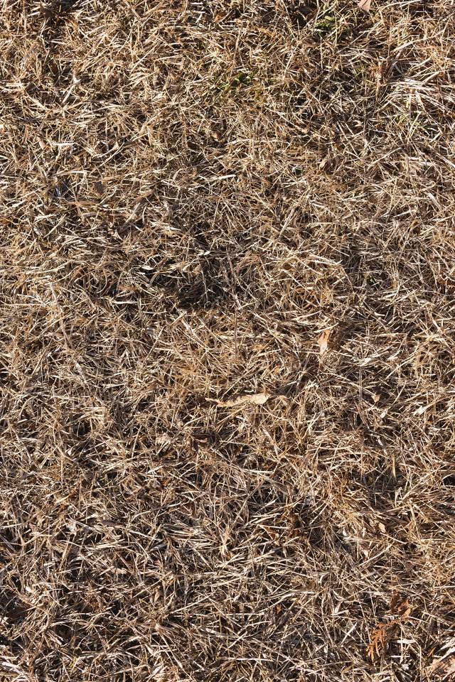 枯れた芝のテクスチャーの写真