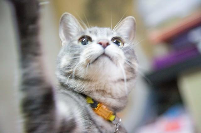 猫ちゃんパンチの写真