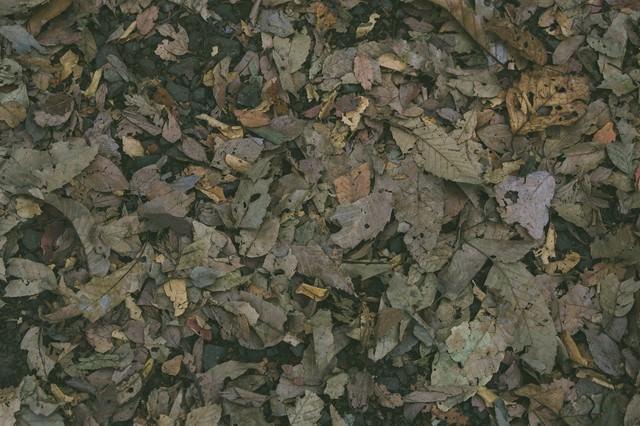 枯れた落ち葉のテクスチャーの写真