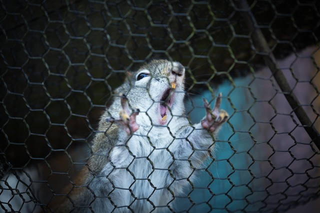 「アッー!」内視鏡検査中のリスの写真