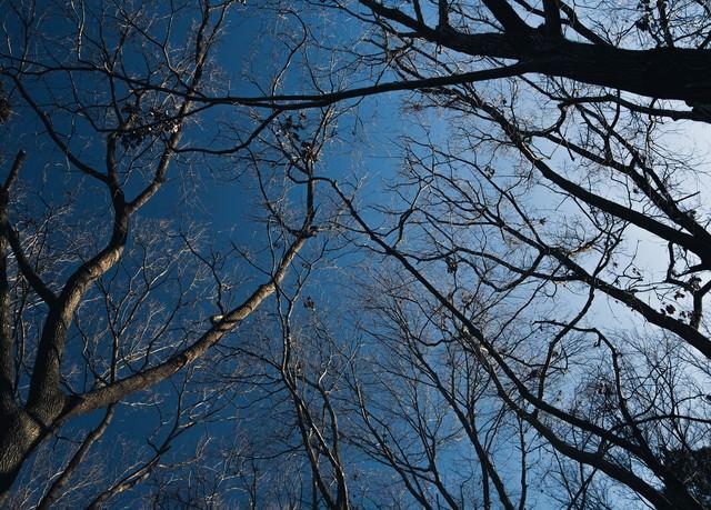 雑木林と青空の写真