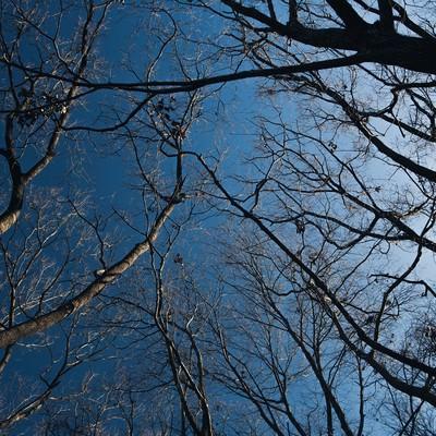 「雑木林と青空」の写真素材
