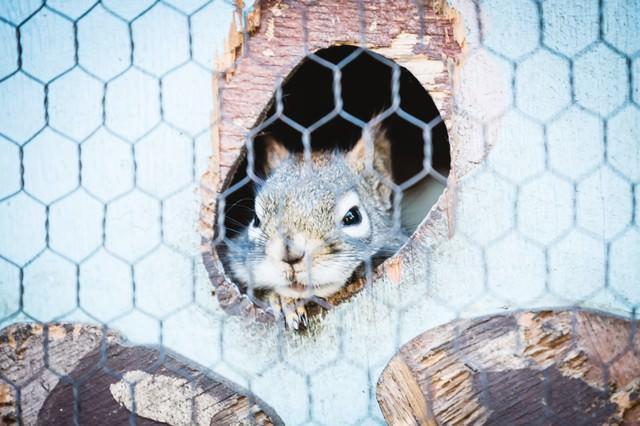 穴から顔を出すリスの写真