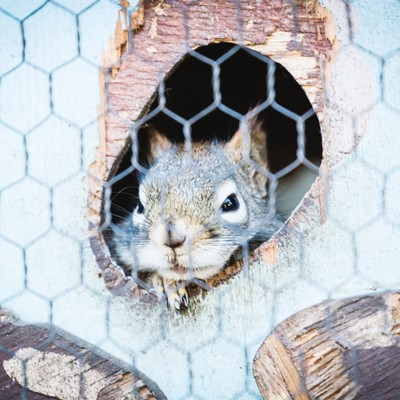 「穴から顔を出すリス」の写真素材