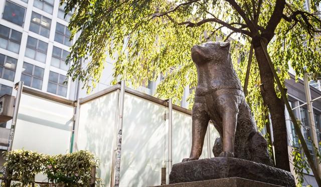 渋谷ハチ公像の写真