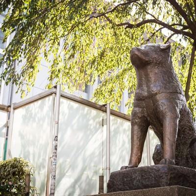 「渋谷ハチ公像」の写真素材