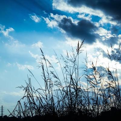 「河川敷と空」の写真素材