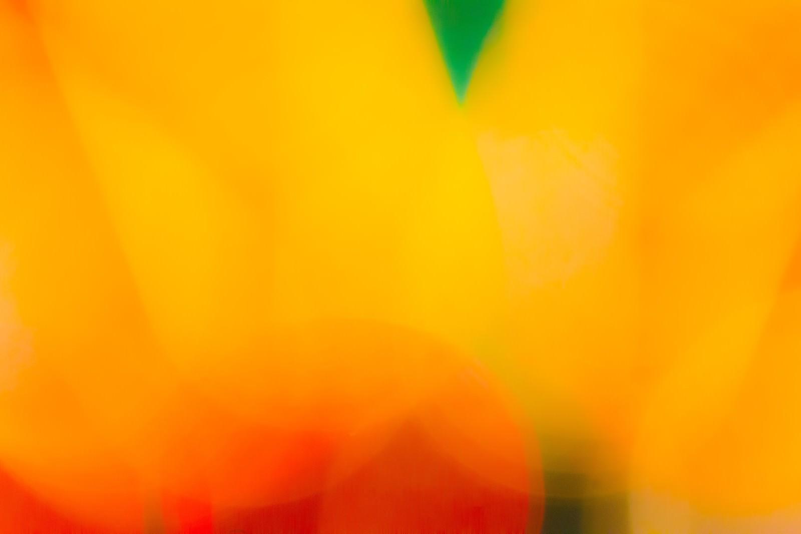 「淡いオレンジ」の写真