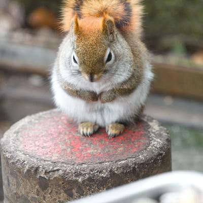 餌の前でお預けしている丸くなったリスの写真