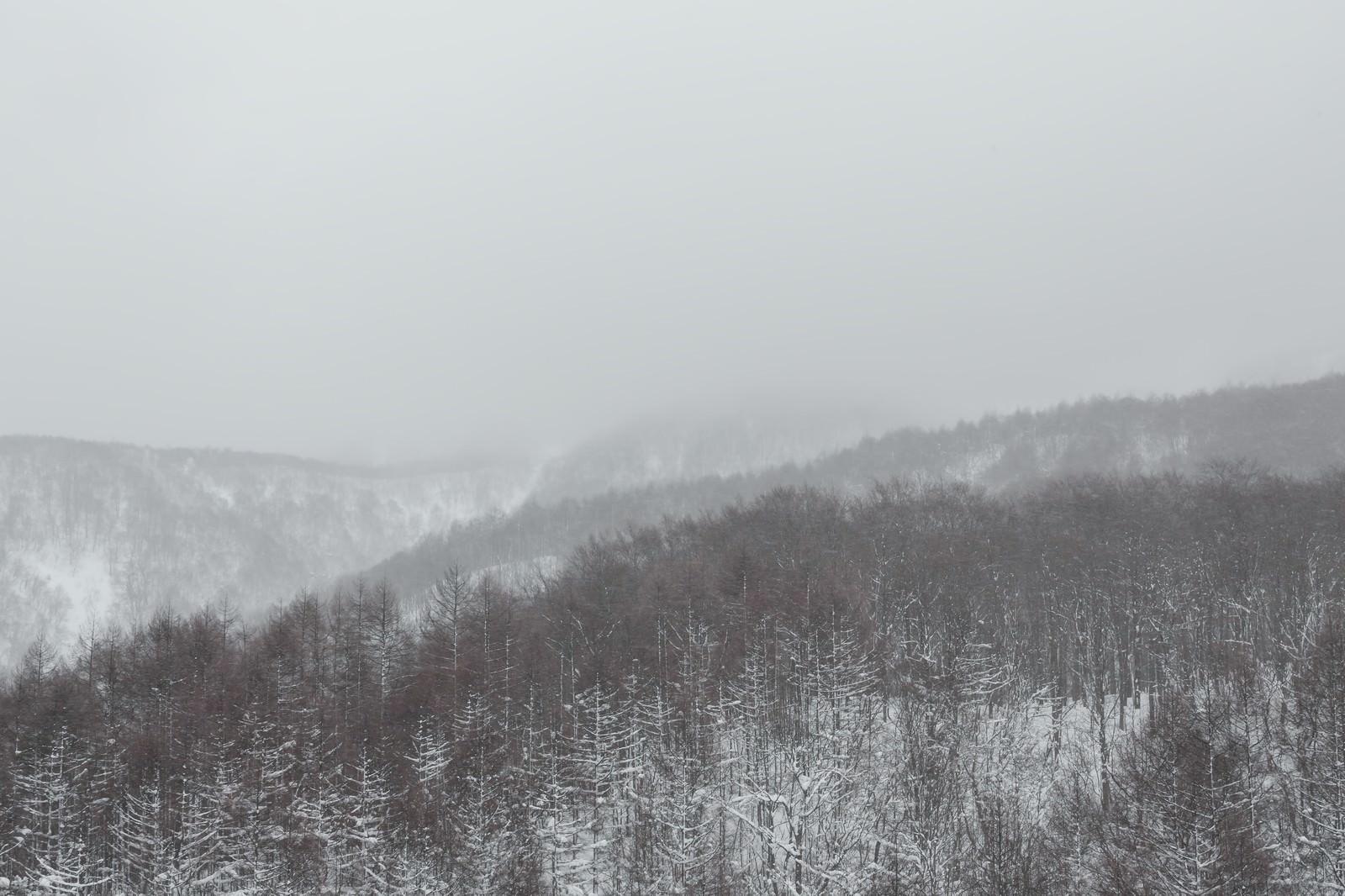 「吹雪きと針葉樹の山吹雪きと針葉樹の山」のフリー写真素材を拡大
