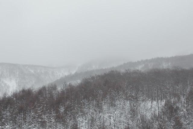 吹雪きと針葉樹の山の写真