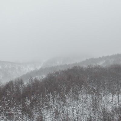 「吹雪きと針葉樹の山」の写真素材