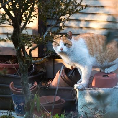 「こっちみんな。猫」の写真素材