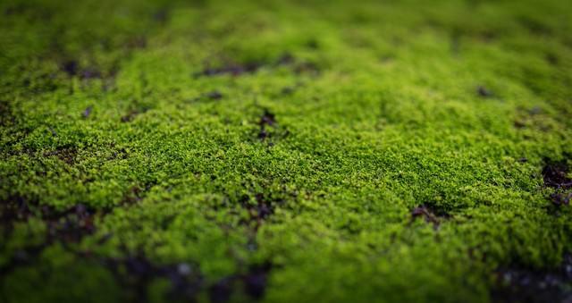 張り付いた苔の写真