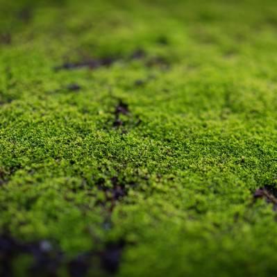 「張り付いた苔」の写真素材