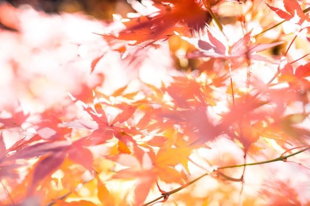 木漏れ日と紅葉の写真