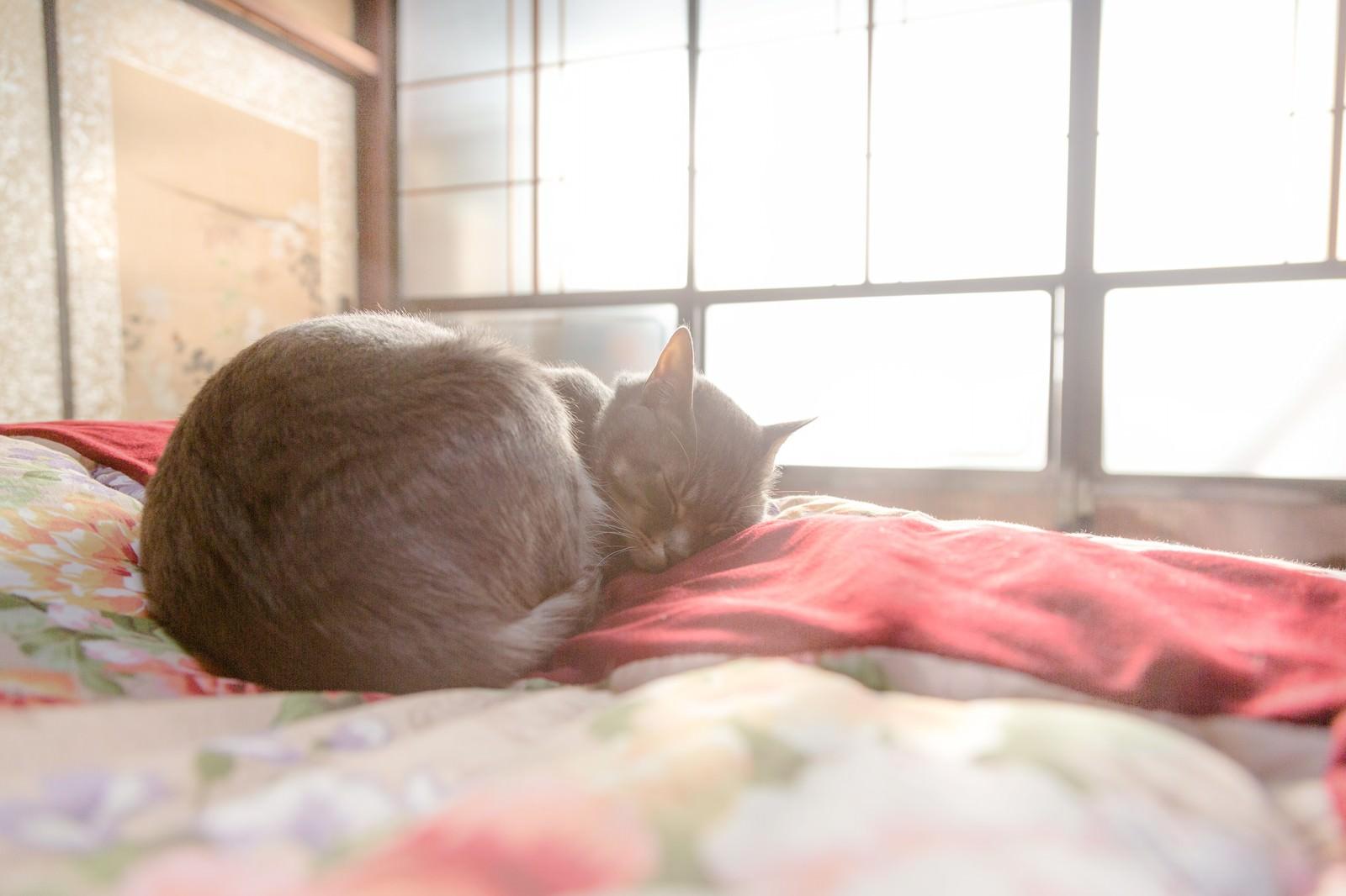 「ひなたぼっこしながら布団の上でスヤスヤ眠る猫」の写真