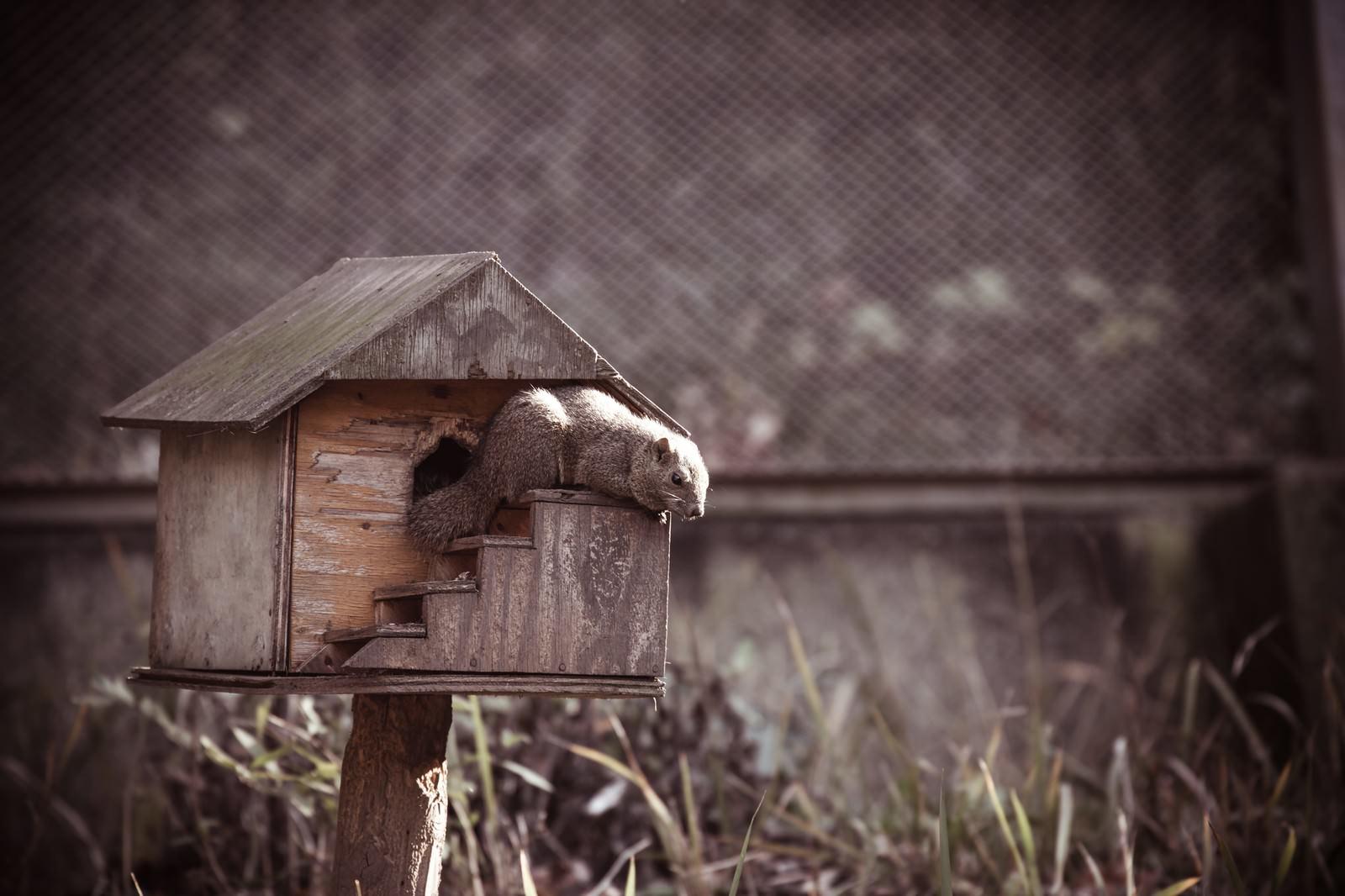 「リスのおうち」の写真