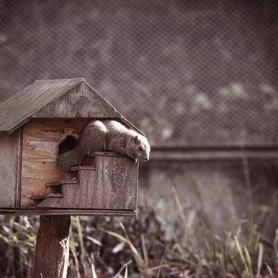 「リスのおうち」の写真素材