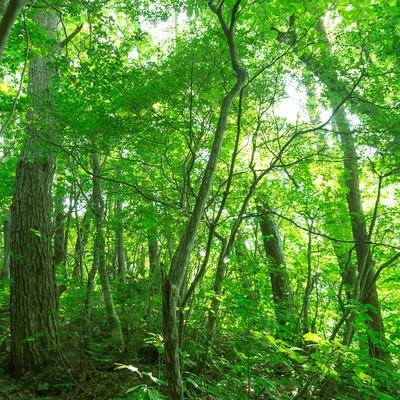 「新緑の森」の写真素材