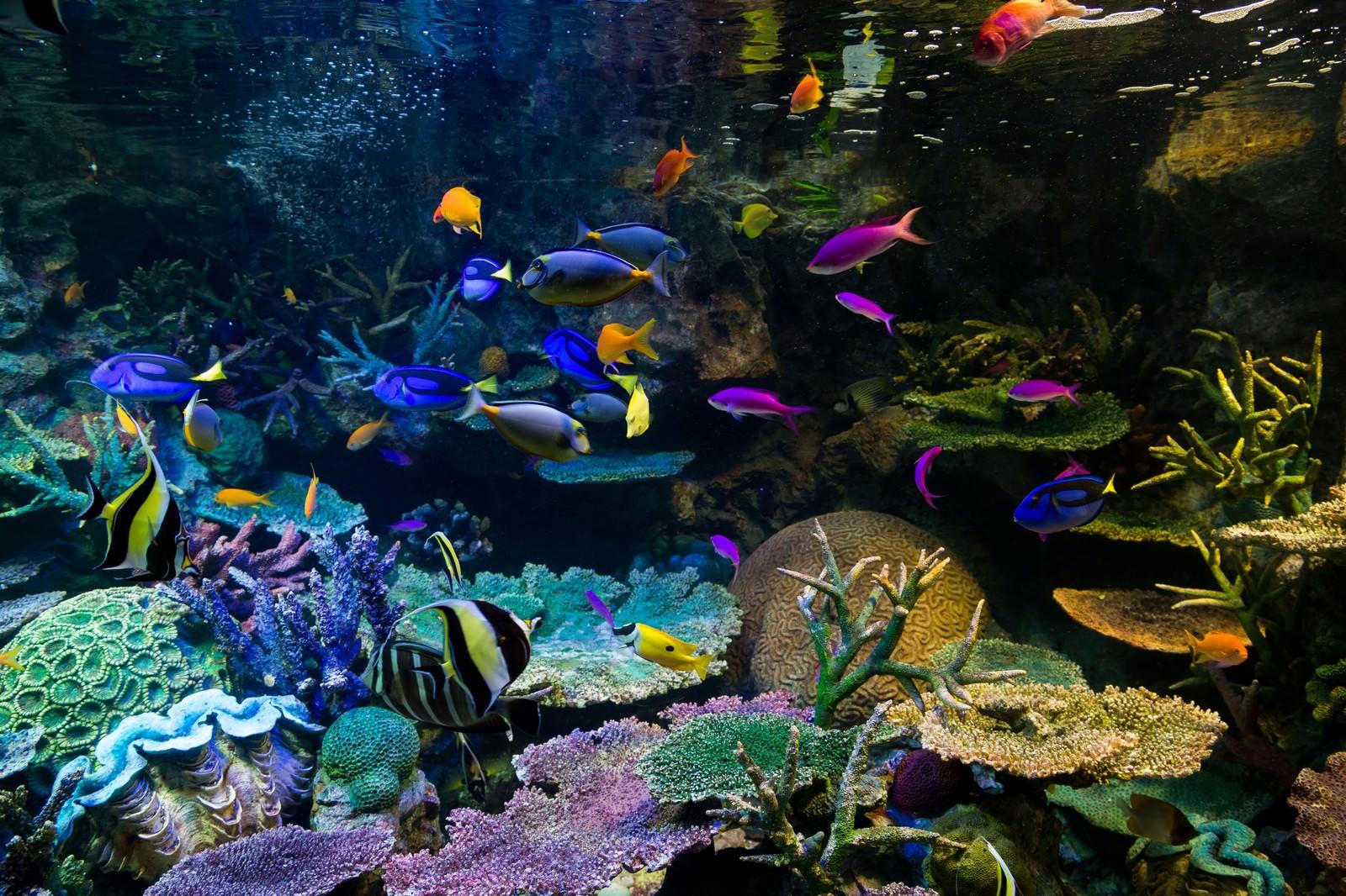 「水族館の熱帯魚」の写真