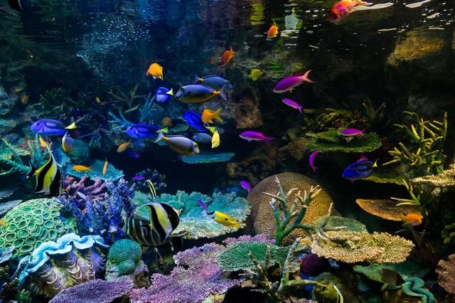 水族館の熱帯魚の写真