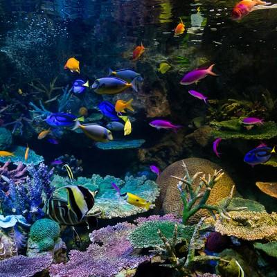 「水族館の熱帯魚」の写真素材