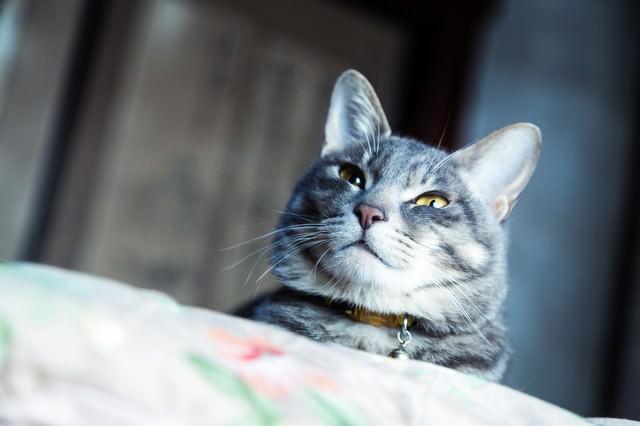 軽蔑した表情で見下してくる猫の写真
