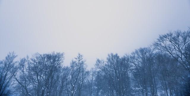 「雪林」のフリー写真素材
