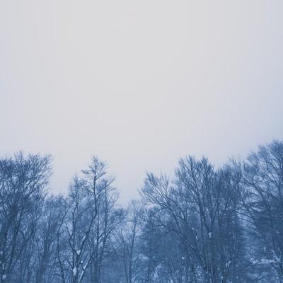 「雪林」の写真素材