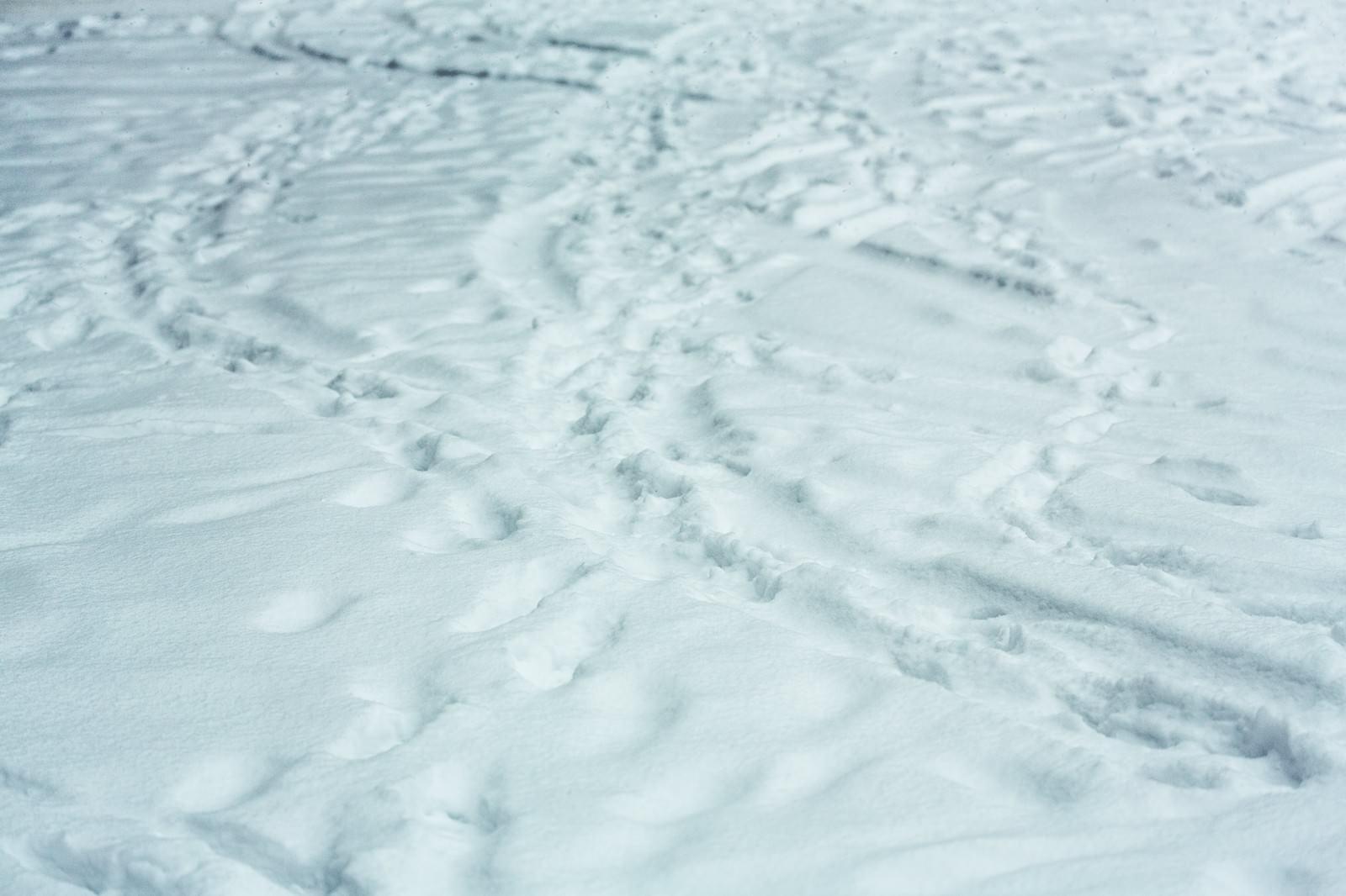 「降り積もる雪(轍と足あと)」の写真