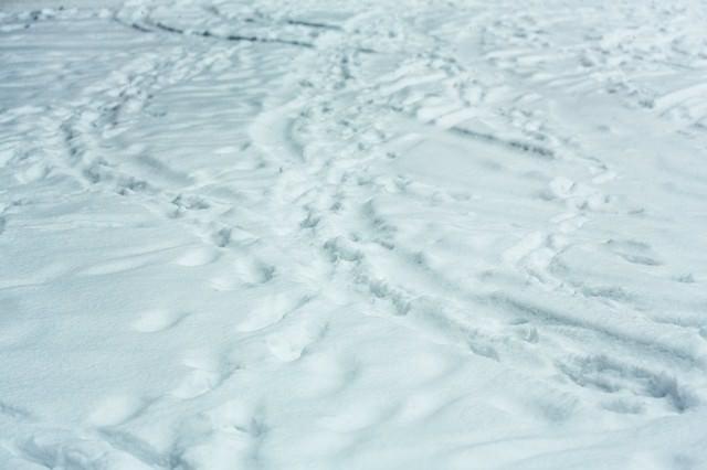 降り積もる雪(轍と足あと)の写真