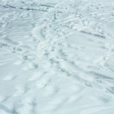 「降り積もる雪(轍と足あと)」の写真素材