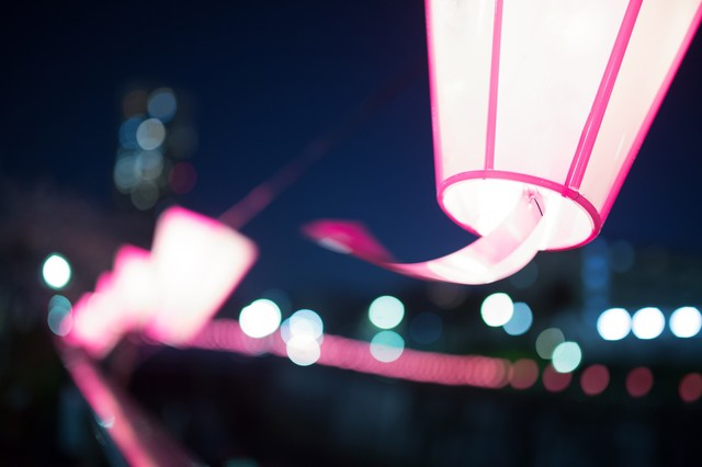 桜まつりの提灯の写真
