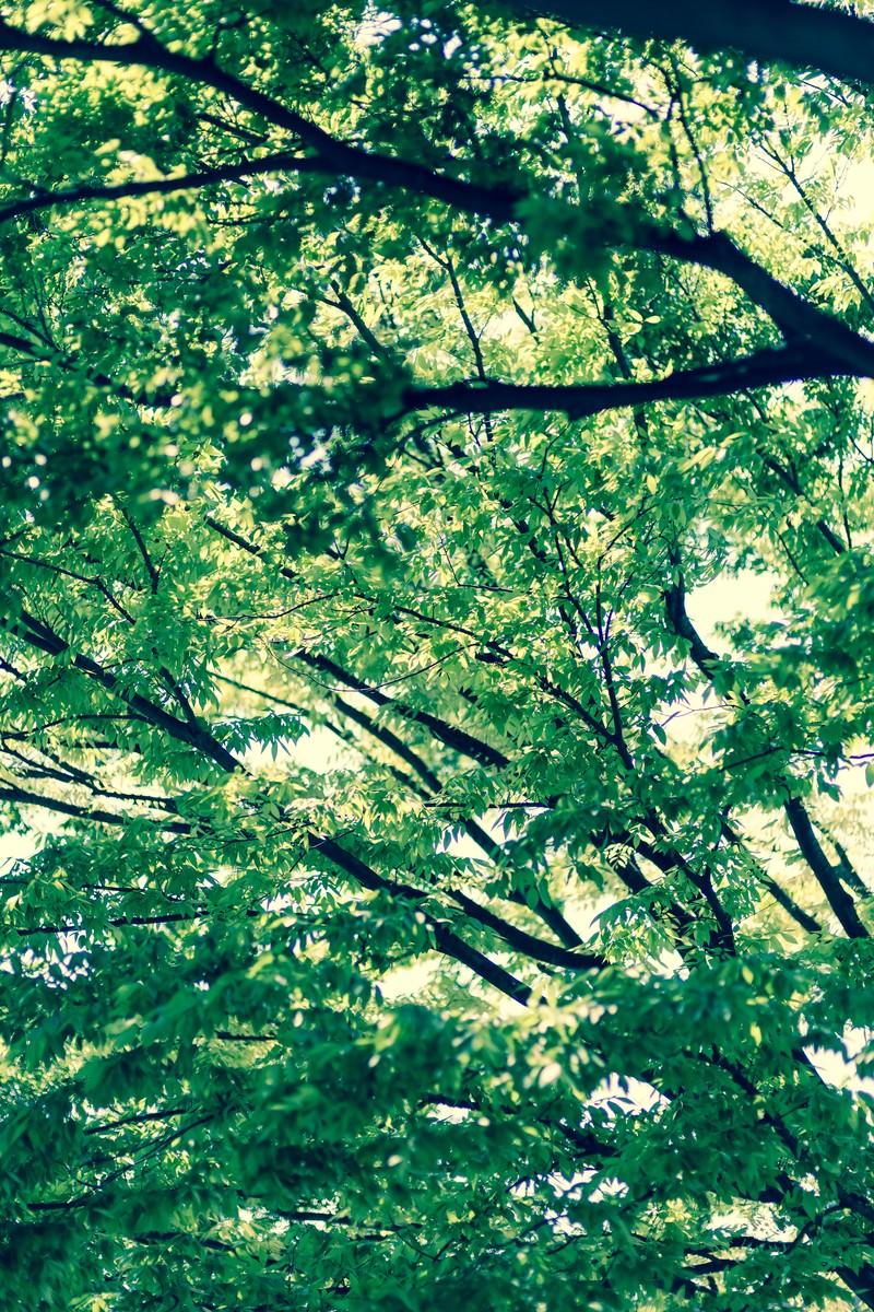 「木漏れ日木漏れ日」のフリー写真素材を拡大