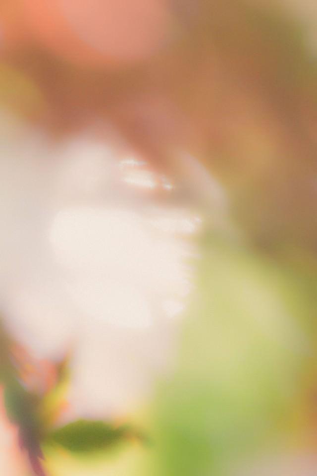 新芽と木漏れ日の写真