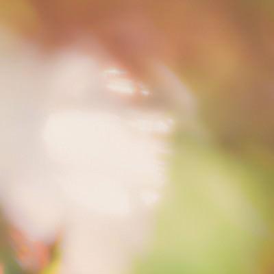 「新芽と木漏れ日」の写真素材