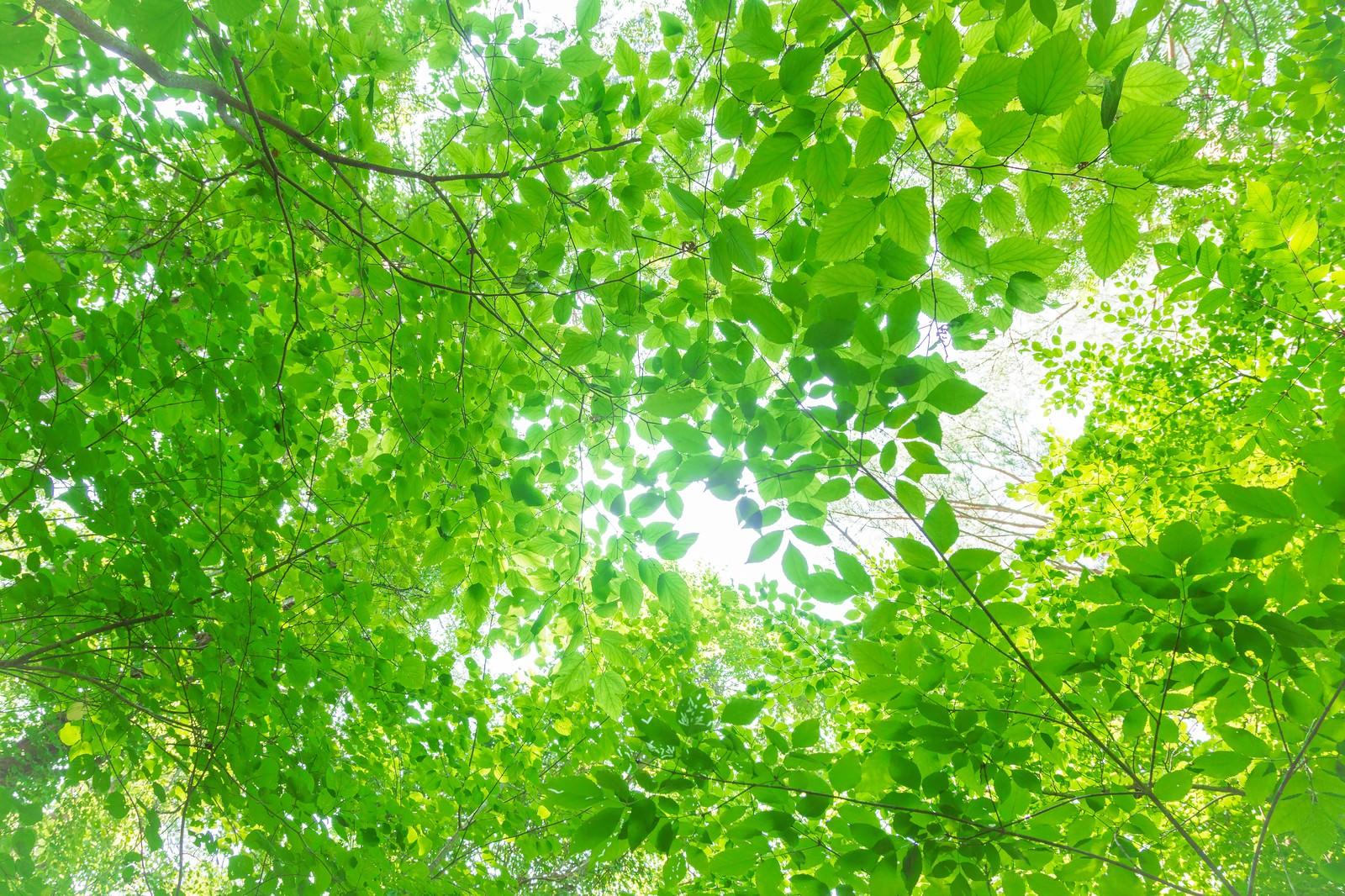 「夏の木漏れ日」